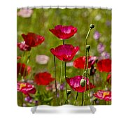 Picture Perfect Poppies Shower Curtain
