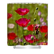 Picture Perfect Too Shower Curtain