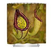 Picture Plant Shower Curtain