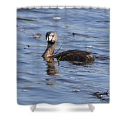 Pied-billed Grebe Shower Curtain