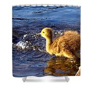 Pied Piper Shower Curtain