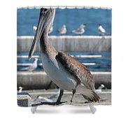 Pier Brown Pelican Shower Curtain