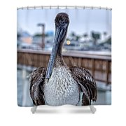 Pier Pelican Shower Curtain