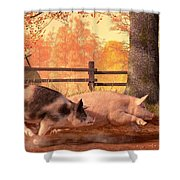Pig Race Shower Curtain