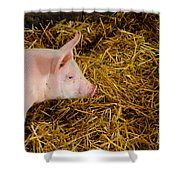 Pig Standing In Hay Shower Curtain