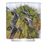 Pigeon Brigade Shower Curtain