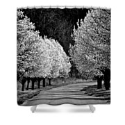 Pigeon Mountain Dogwoods In Black And White Shower Curtain