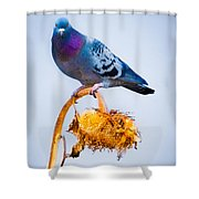Pigeon On Sunflower Shower Curtain