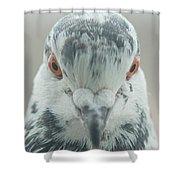 Pigeon Portrait En Face Shower Curtain