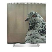 Pigeon Portrait Shower Curtain