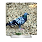 Pigeon Toed Shower Curtain
