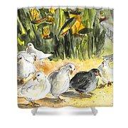 Pigeons In Benidorm Shower Curtain