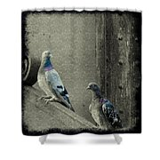 Pigeons In Damask Shower Curtain