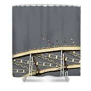 Pigeons Landing To The Bridge Shower Curtain