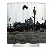 Pigeons Of San Marco  Shower Curtain