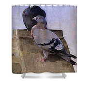Pigeons On The Roof Shower Curtain