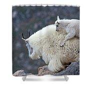 Piggyback Ride Shower Curtain