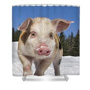 Piglet Walking In The Snow Shower Curtain
