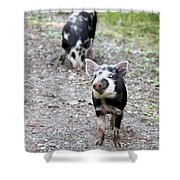 Piglets On The Loose Shower Curtain