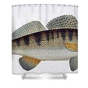 Pike Perch Shower Curtain