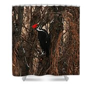 Pileated In Winter Shower Curtain