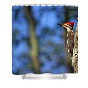 Pileated Series #14 Shower Curtain
