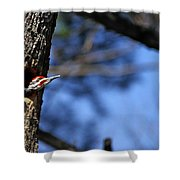 Pileated Series #3 Shower Curtain