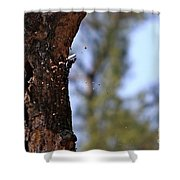 Pileated Series #5 Shower Curtain