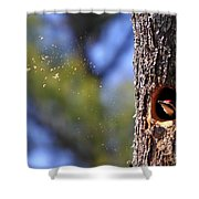 Pileated Series #6 Shower Curtain