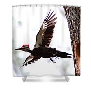 Pileated Series #7 Shower Curtain