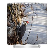 Pileated Woodpecker Winter Shower Curtain