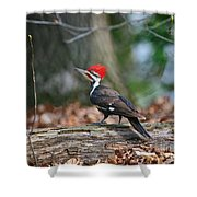 Pileated Woodpecker On Log Shower Curtain