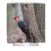 Pileated Woodpecker On Tree Shower Curtain