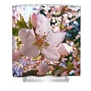 Pin Cherry Blooms Shower Curtain