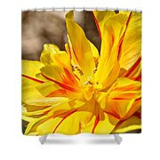 Pin Striped Tulip Shower Curtain