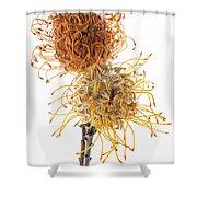 Pincushion Protea Shower Curtain