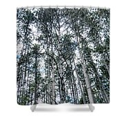 Pine Abstract Shower Curtain