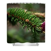 Pine Blossom Shower Curtain
