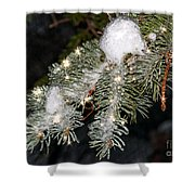Pine Branch With Ice And Stars Shower Curtain