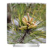 Pine Catkins Shower Curtain