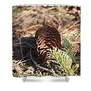 Pine Cone And Small Branch Shower Curtain