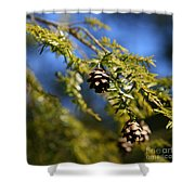 Pine Cone Blues Shower Curtain