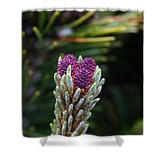 Pine Cone Buds Shower Curtain
