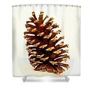 Pine Cone On White Shower Curtain