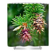 Pine Cone Stages Shower Curtain