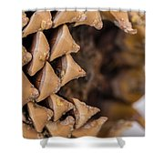 Pine Cone Study 16 Shower Curtain
