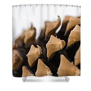 Pine Cone Study 2 Shower Curtain