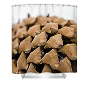 Pine Cone Study 4 Shower Curtain
