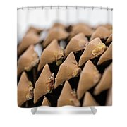 Pine Cone Study 9 Shower Curtain