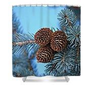 Pine Cones Shower Curtain